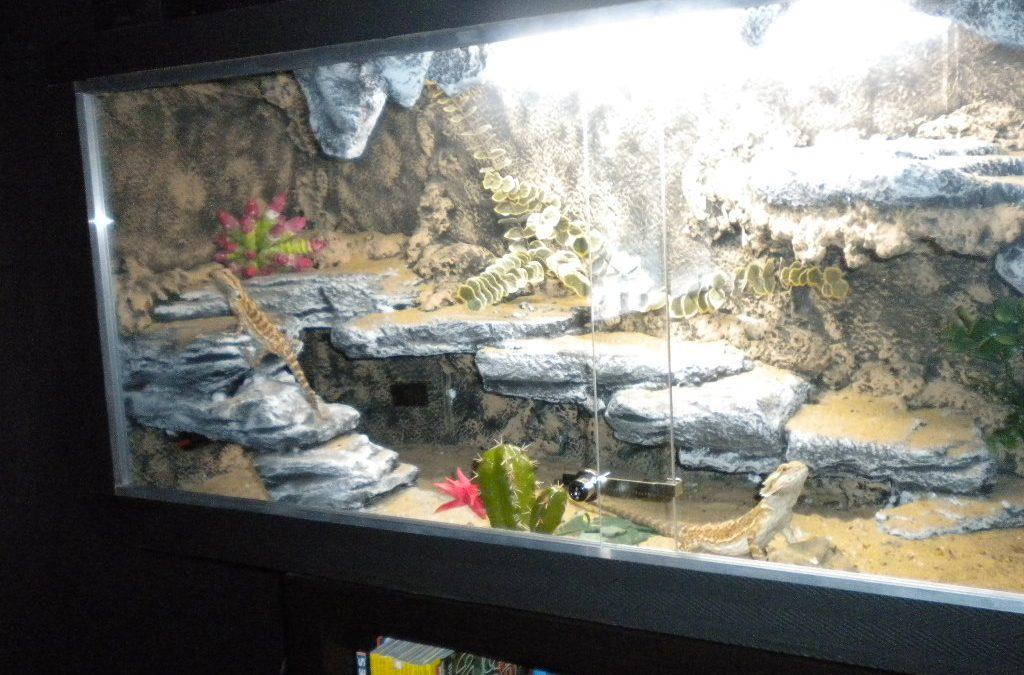 ▷ Como Hacer un Terrario Casero Para Reptiles y Pogonas 🦎 | Paso a Paso 👣 【 2020 】