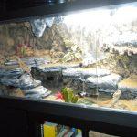 ▷ Como Hacer un Terrario Casero Para Reptiles y Pogonas ? | Paso a Paso ? 【 2020 】