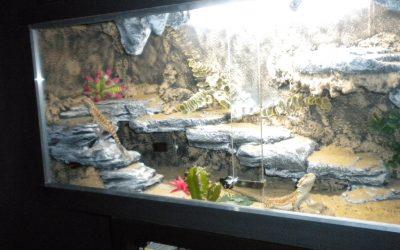 ▷ Como Hacer un Terrario Casero Para Reptiles y Pogonas 🦎 | Paso a Paso 👣 【 2018 】