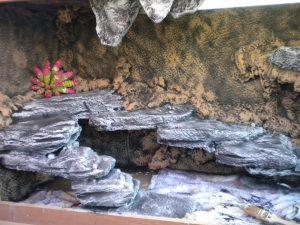 Cuantas capas pintura terrario pogona