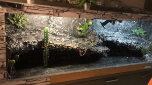Decoracion terrario reptil