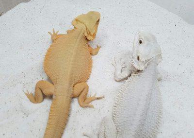 Witblis Hypotrans y (Blanca)Zero Hypo