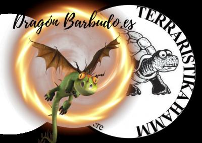 Dragones Barbudos Disponibles en Hamm