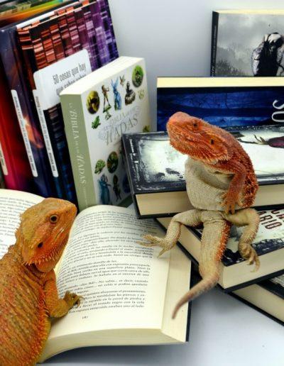 Feliz Día del Libro de Dragones