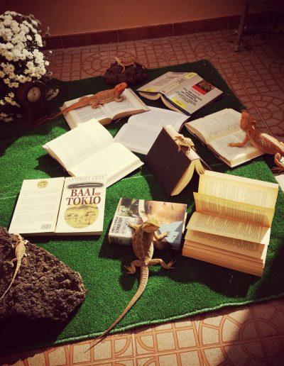 Libros en el Cesped