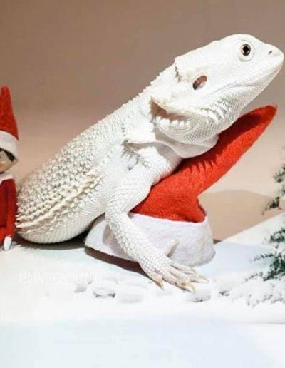 """Blanca Navidad ? """