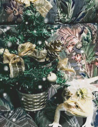 En Casa Dragón ya es Navidad...