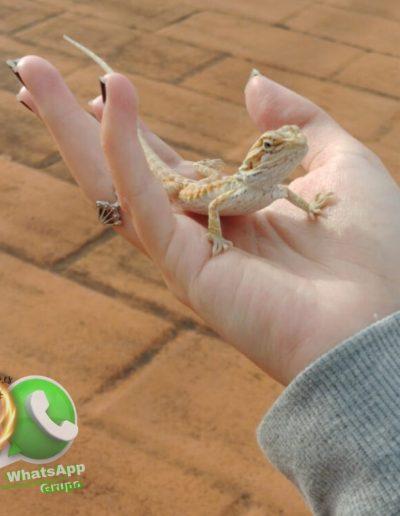 MI primer Dragón -