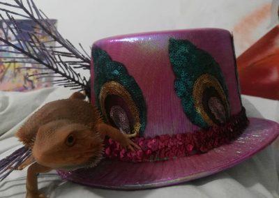 Imma Carbó Tubert Carnaval,carnaval !!!