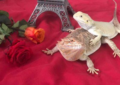 Jose David Lanza Cebrian ¡París, no hay edad para el amor!