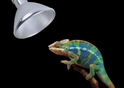 bombilla hid para reptiles