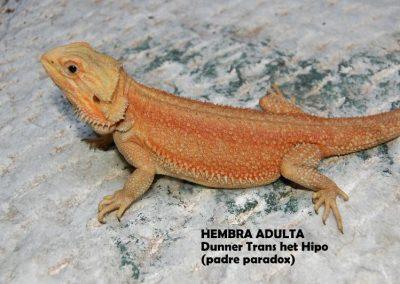 Hembra